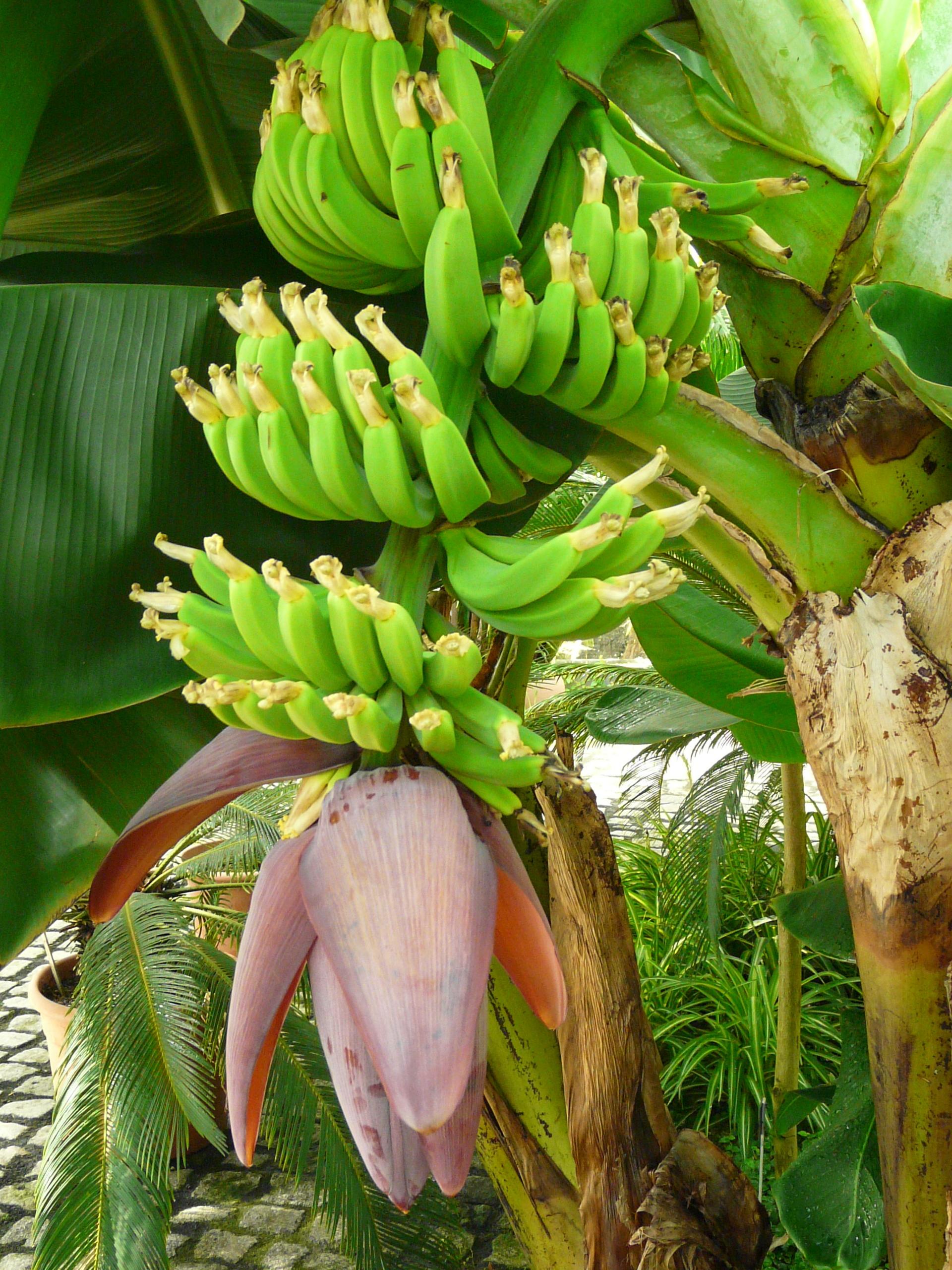 http://www.botanischer-garten-wuppertal.de/assets/plugindata/w2dblgd2d4b94b285c71b727911f884074a6c0/pic1297071294.jpg