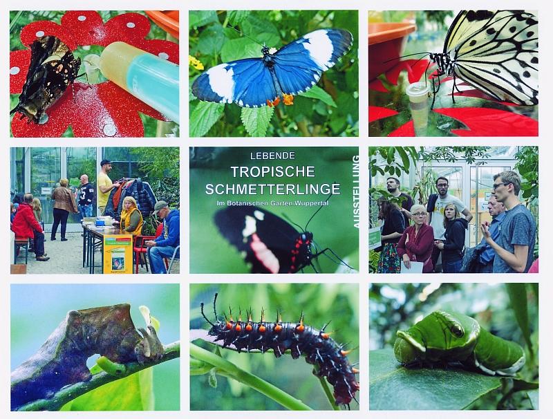 a Tropische Schmetterlinge - Ausstellung vom 18.9. bis 18.10.2015 - verkleinert
