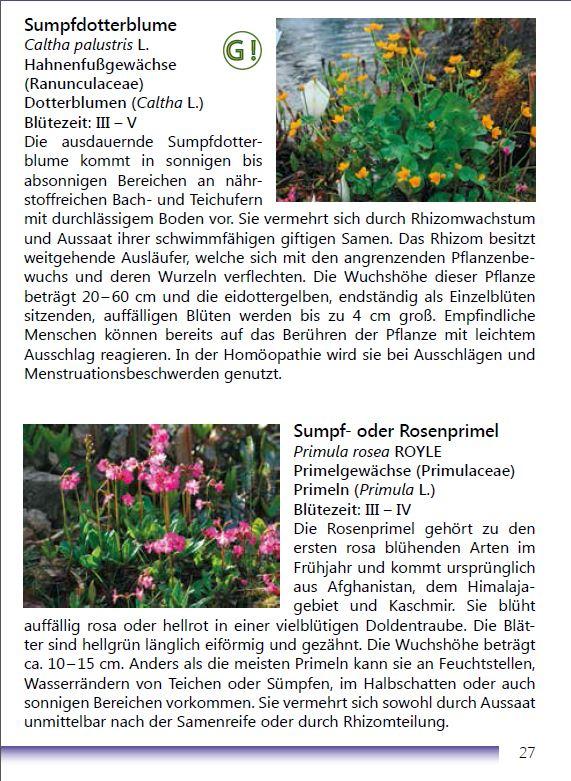Die Teichvegetation Seite 27
