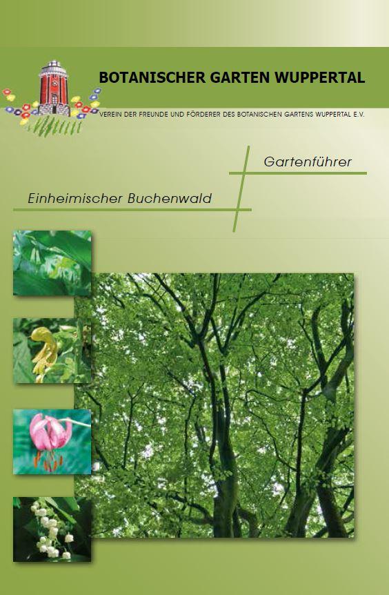 Einheimischer Buchenwald Deckblatt