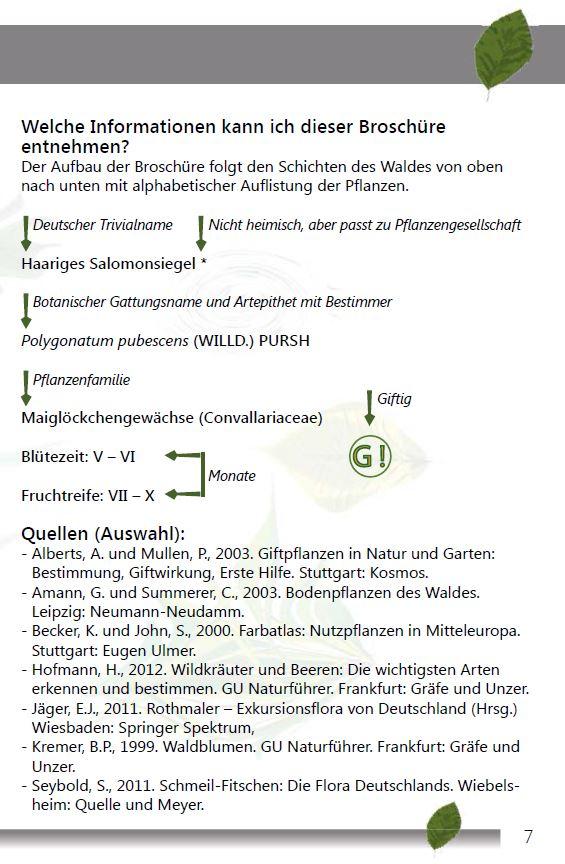 Einheimischer Buchenwald Seite 7