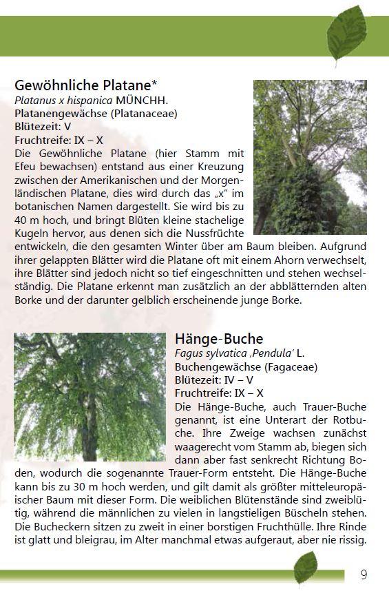 Einheimischer Buchenwald Seite 9