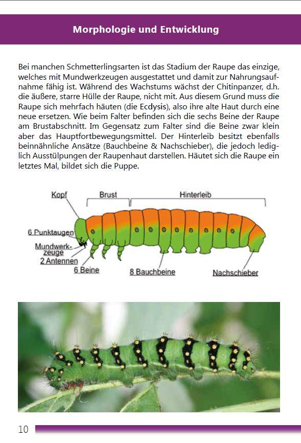 Tropische Schmetterlinge Entwicklung