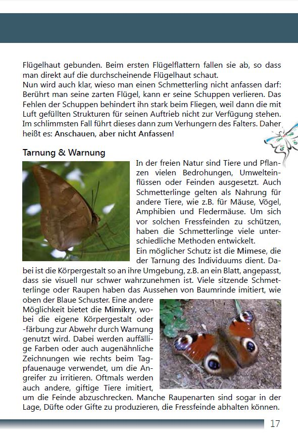 Tropische Schmetterlinge Seite 17